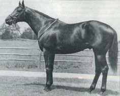 POLYNESIAN  by Unbreakable - Black Polly by Polymelian - sire of NATIVE DANCER