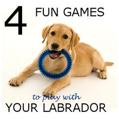 Check out the four fun games to play with your Labrador, in the linked article.