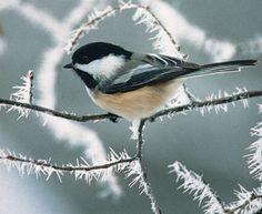 PA aves invierno