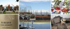 Summer wines: 14 vinos para ganarle al calor