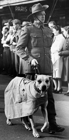 Great Dane pup, mascot of 2/13th Battalion, joins parade at Katoomba. [picture] [ca. 1943]