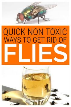 Discover non toxic ways to get rid of flies. These quick hacks will get rid of flies indoors and outdoors using natural ingredients rather than dangerous pesticides. #getridofflies #nontoxicpestcontrol #nontoxic Keep Flies Away, Get Rid Of Flies, Natural Cleaning Solutions, Natural Cleaning Products, Green Cleaning, House Cleaning Tips, Cleaning Hacks, Flies Outside, Fly Spray