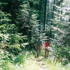 Die Wanderwege im Harz führen oft durch wilde, ursprüngliche Natur. Foto: djd/Maritim Hotels
