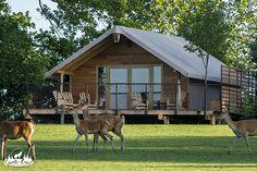 Hébergements insolites et atypiques du Parc Animalier de Sainte Croix en Lorraine entre Strasbourg Metz et Nancy. Dormir dans la cabane du trappeur avec les loups, dormir avec les loups dans une tanière ou dans une cabane dans les arbres ou dans une cabane de rondins mais encore dans des tentes safari et bivouac.