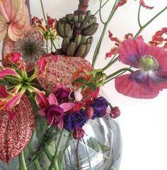 brrch_floral ... amazing anthiriums