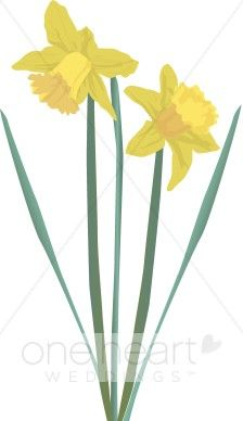 Daffodil clip art | daffodils | Pinterest | Gardens, Trees and Herbs