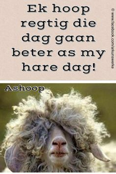 Afrikaans Cute Quotes, Best Quotes, Funny Quotes, Afrikaanse Quotes, Good Morning Messages, Happy Thoughts, Daily Quotes, Laugh Out Loud, Quote Of The Day