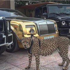 | The Beauties & The Beast | Tag A Friend! Spread The Wealth! Snapchat @LuxuriousClub | #LuxuriousClub _______________________________ #luxurious #luxurylife #billionaire #luxury #paris #france...