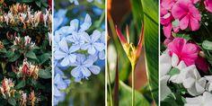 10 ανθεκτικά φυτά για μπαλκόνι | Τα Μυστικά του Κήπου Plants, Gardening, Lawn And Garden, Plant, Planets, Horticulture