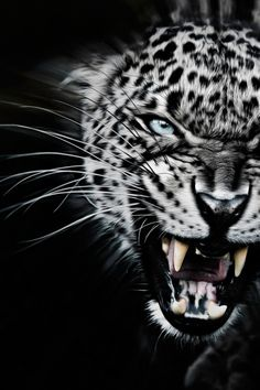 javysb:Very Angry by ©Paul Keates | JavysB | IG *