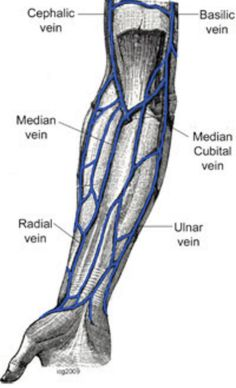 at the level of the elbow, three veins make an m shape: the, Cephalic Vein