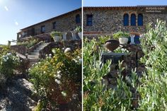 CASA MORI, Stellenbosch Farm Stay, Private Room, Small Farm, Home And Away, B & B, South Africa, Plants, Plant, Planets