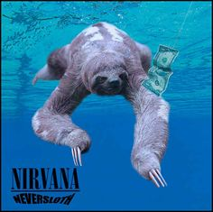 13 Iconic Album Covers, Improved By Sloths