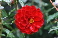 Flower 13 by Mohammad Azam