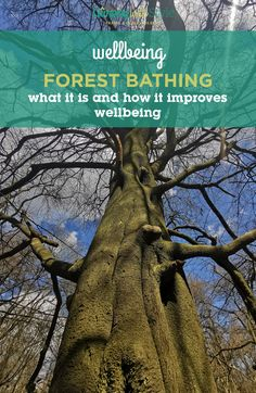 Move over Hygge, it's time to embrace Shinrin-Yoku or Forest Bathing as it's more commonly known. If you've never heard of it before, it basically means spending time in a forest and using all of your senses to tune in to the natural world around you, and doing so provides stress-relieving benefits. If you find other forms of meditation difficult, mindfulness in nature could help you disconnect and centre yourself. #shinrinyoku #wellbeing #forestbathing #health #mindfulness