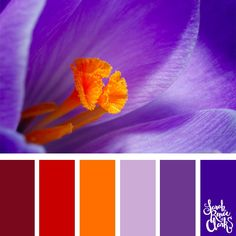 25 color palettes inspired by Pantone fall / winter 2018 color trends Purple Red Color, Purple Color Schemes, Purple Palette, Color Schemes Colour Palettes, Spring Color Palette, Colour Pallette, Color Trends, Color Combos, Winter Color Palettes