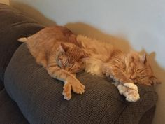 A puddle of cat on my couch   cats funny pictures http://www.buzzblend.com