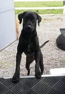 """Posted October 22, 2014 The family of a dog shot in July by a Coeur d'Alene officer has filed a claim with the city, The Spokesman-Review News reported October 21. Craig Jones, the owner of a black lab named Arfee, who was shot by Officer David Kelley, has filed a lawsuit for $350,000 for the """"loss and pain from the unjustified police shooting."""""""