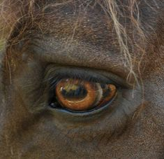 The kind expression of the gentle horse...