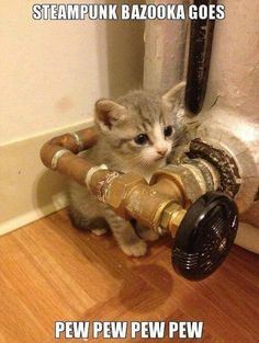 I love that Steampunk Tendencies does not have the same negative banter about Steampunke'd. here is a pic of a Steampunk Kitteh as a. Crazy Cat Lady, Crazy Cats, Funny Animals, Cute Animals, Animal Funnies, Animal Memes, Baby Animals, Steampunk Cat, Steampunk Animals