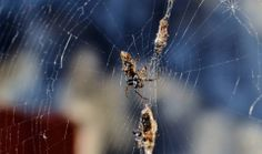 Teia de Aranha, Spider
