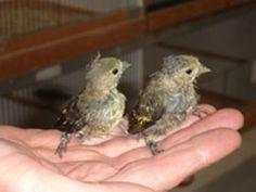 IVN: Tropische vogels houden