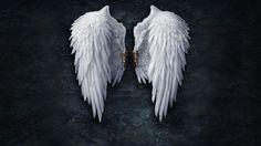 broken wallpapers | Broken angel wings Wallpaper
