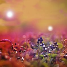 Purple Fruits | #nature #flowers iPad wallpapers @mobile9