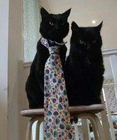 @mysadcat - Sad because he doesn't have a dandy neck tie
