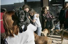 Pets welcome at domestic violence and homeless shelters