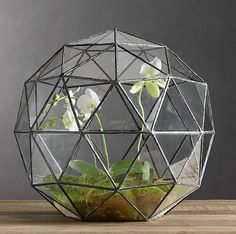 The Fern & Mossery: Geodesic Orchid Terrarium
