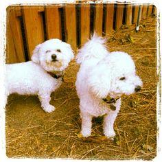 Daisy and Cooper by hdenhertog, via Flickr