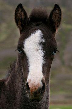 Cute, blue-eyed foal!