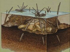 An illustration depicting the early Archaic Period burial of the Windover Bog Bodies in Florida