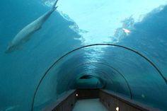 Atlantis Aquarium ; Nassau ; Bahamas