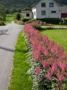 Planters, Sidewalk, Garden Design, Gardens, Walkway, Planter Boxes, Plant, Flower Pots, Walkways