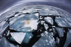"""Scientists maintain that the melting of the ice will soon become a major problem for humans as well as polar bears, not just because of rising sea levels but also because increasing sea temperatures are affecting the weather, sea currents and fish stocks."" Read more: http://www.businessinsider.com/veolia-environment-wildlife-photographer-2012-10?op=1#ixzz2QmekMK37"
