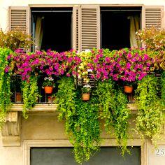 best summer flowers on balcony – Vyhľadávanie Google White Plants, Large Plants, Cool Plants, Balcony Plants, Balcony Garden, Outdoor Plants, Angels Garden, Creepers Plants, Climber Plants