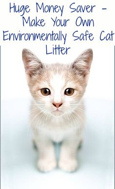 Huge Money Saver – Make Your Own Environmentally Safe Cat Litter