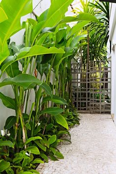 Paisagismo: 16 corredores decorados com plantas Tall, bland white sidewall has taken on the look of rainforest (Photo: Edu Castello / Editora Globo) Small Tropical Gardens, Tropical Garden Design, Backyard Garden Design, Garden Landscape Design, Small Garden Design, Tropical Backyard Landscaping, Side Yard Landscaping, Florida Landscaping, Landscaping Plants