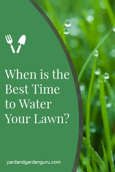 Watering your lawn at the right time is very important. Find out the best time to water your lawn.