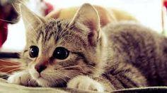 Resultado de imagem para imagens de gatos fofinhos com frases
