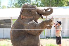 Show de l'éléphante Parc Alexis Gruss