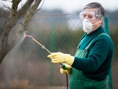 There are two types of diseases that can affect trees. If you think your trees are affected, contact Great Northern Regreenery for tree disease control. Health And Nutrition, Health And Wellness, Types Of Diseases, Human Dna, Fight The Power, The Time Is Now, Good To Know, Natural Health, Good Things