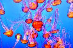 unterwasserfotografie-pixum01.jpg (1200×797)