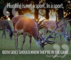 16 best anti hunting quotes images on pinterest animal rescue
