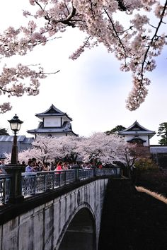 Cherry Blossom Festival at one of many Japanese Temples.