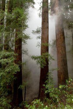 Misty forest... heavy fog... beautiful stream of light... So lovely on many levels |