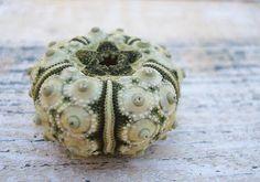 Green Sputnik Sea Urchins 4 pcs by seashellsupply on Etsy, $4.00
