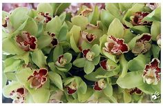 love the color of these orchids as well